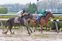 Красочные фото лошадиных скачек от Belmont стоковая фотография