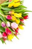 Красочные цветеня тюльпана Стоковое Фото