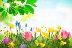 Красочные цветки весны стоковые фото