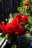 Красочные цветки вполне солнечности в летнем времени Стоковая Фотография RF