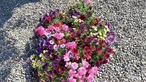 Красочные цветки в ветерке акции видеоматериалы