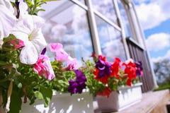 Красочные цветки в задворк на отражении летнего дня Стоковое Изображение RF