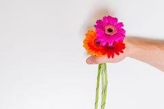 Красочные цветки в мужской руке Стоковые Изображения RF