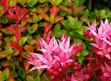 Красочные цветки в цветенях Стоковые Фото