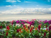 Красочные цветки и голубое небо Стоковая Фотография