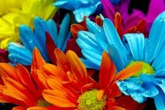 Красочные цветки и капельки воды Стоковая Фотография RF