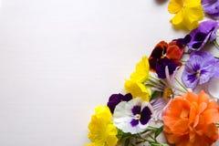 Красочные цветки на земле задней части белизны Стоковые Изображения RF