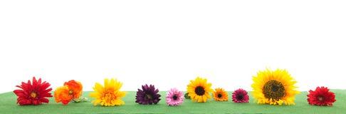 Красочные цветки на зеленой траве Стоковое Изображение RF
