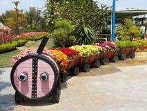 Красочные цветки на цветочном горшке Стоковое фото RF