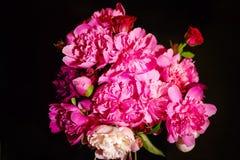 Красочные цветки на черной предпосылке - красочные пионы Красота, Стоковое Фото