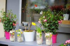 Красочные цветки проданные на внешнем цветочном магазине стоковое фото rf