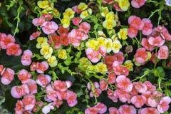Красочные цветки с зелеными лист стоковое изображение