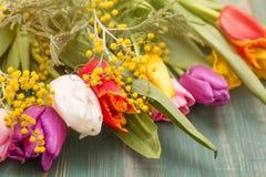 Красочные цветки тюльпана весны на зеленой деревянной предпосылке с концом мимозы вверх Стоковое фото RF