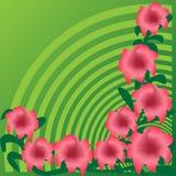Красочные цветки Стоковые Изображения RF