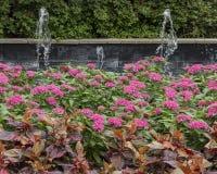 Красочные цветники и фонтан в дендропарке Далласа и ботаническом саде Стоковые Фотографии RF