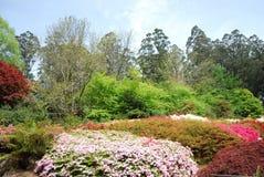 Красочные цветочные сады весны Стоковое Фото