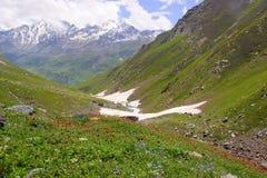 Красочные цветя долины ледника Himachal Pradesh стоковые фото