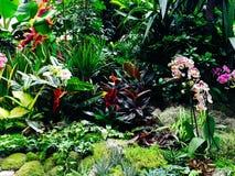 Красочные экзотические цветки в саде Стоковое фото RF