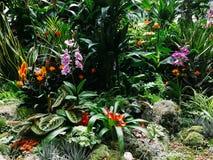 Красочные экзотические цветки в саде Стоковые Фотографии RF