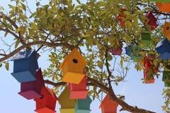 Красочные dovecotes на дереве Стоковое Изображение RF