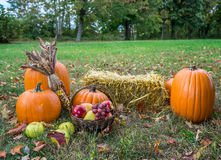 Красочные pumkings осени Стоковое Фото