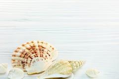 Красочные seashells на белом столе Взгляд макроса Стоковое Изображение