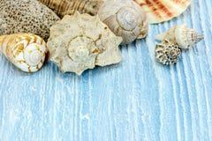 Красочные seashells на голубой деревенской деревянной предпосылке Стоковые Фото