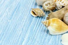 Красочные seashells на голубой деревянной предпосылке concep временени Стоковые Изображения