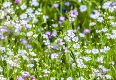 Красочные wildflowers на луге Стоковые Фотографии RF