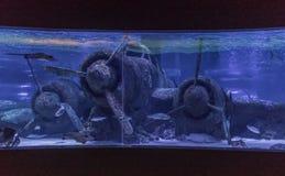 Красочный аквариум Антальи, Турция стоковое изображение rf
