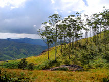 Красочный ландшафт Munnar, Кералы, Индии Стоковое фото RF