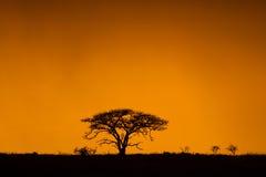 Красочный африканский восход солнца Южная Африка Стоковая Фотография RF