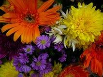 Красочный букет свежего цветка на весеннее время Стоковое Фото