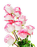 Красочный букет цветка от роз изолированных на белой предпосылке Стоковое Изображение