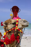 Красочный верблюд на пляже острова фламинго, Средиземном море Стоковое фото RF