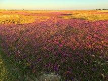 Красочный весеннего сезона Стоковое Фото