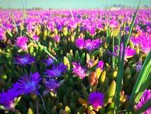 Красочный весеннего сезона Стоковое фото RF
