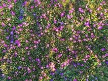 Красочный весеннего сезона Стоковая Фотография