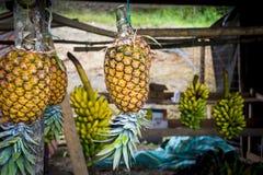 Красочный висеть ананасов Стоковое Фото