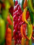 Красочный висеть перцев Chili Стоковое фото RF