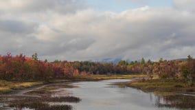 Красочный вход листвы Стоковая Фотография RF