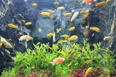 Красочный в аквариуме Стоковая Фотография