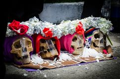 Красочный в смерти стоковые фотографии rf