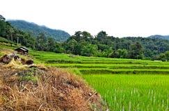 Красочный в террасном поле риса Стоковое Фото