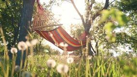 Красочный гамак протягиванный между деревьями в саде Пестротканый striped гамак вися в саде между сток-видео