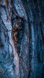 Красочный грубый макрос крупного плана текстуры дерева стоковые изображения rf