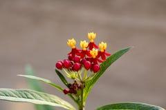 Красочный засоритель бабочки Стоковое Фото