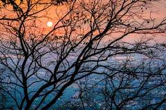 Красочный заход солнца через дерево стоковые изображения rf
