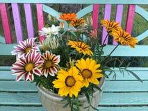 Красочный зацветать цветков Gazania Стоковые Изображения