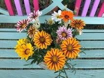 Красочный зацветать цветков Gazania Стоковые Фото